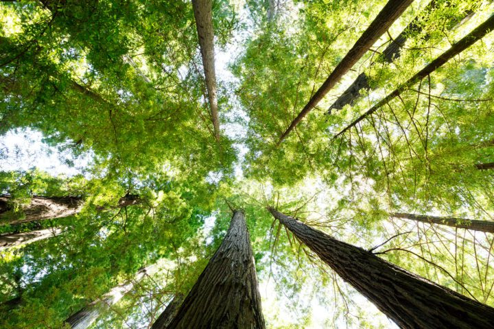 Lee's Trees – A Devotion On Perspective